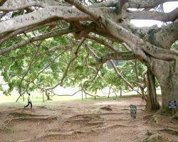 Фото - Дерево цілей