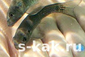 Фото - Як роблять педикюр рибками в spa-салонах