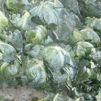 Фото - Як зберігати капусту