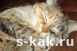 Фото - Як мало спати і висипатися