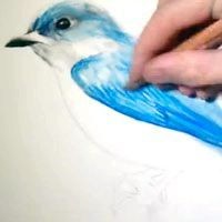 як намалювати жар птицю дитині
