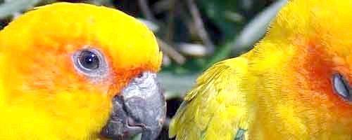 Фото - Як навчити папугу говорити