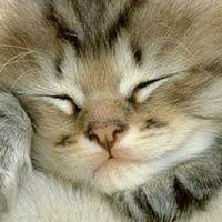 Фото - Як назвати кошеня