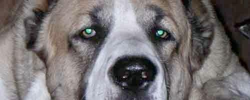 Фото - Як назвати собаку
