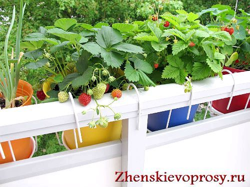 Фото - Як зробити город на балконі?