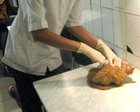 Фото - Як зробити укол кішці?