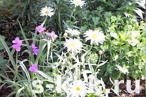 Фото - Як прикрасити і надати стиль садовій ділянці