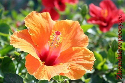 Фото - Як виглядає квітка безшлюбності?