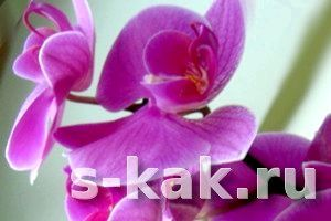Фото - Як вирощувати орхідеї в домашніх умовах