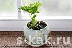 Фото - Як вирощувати зелень вдома на підвіконні