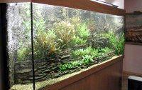 Фото - Яка температура повинна бути в акваріумі?