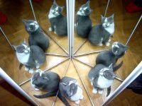 У кішки 9 життів