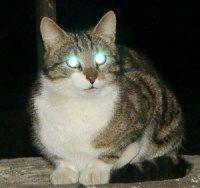Фото - Чому у кішки світяться очі?