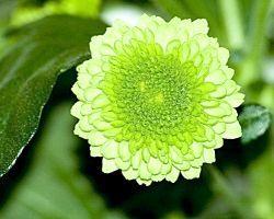 Фото - Зелений колір в психології
